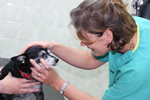 Firs Veterinary Surgery, Kelsall - 1